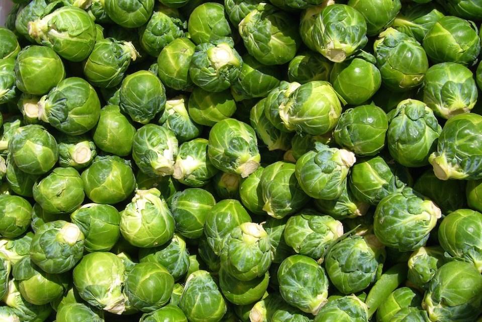 Sprout Scones, 15p (V)